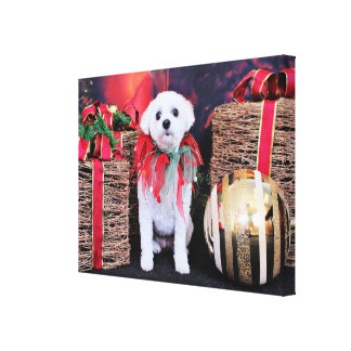 Christmas - MaltiPoo - Taz Stretched Canvas Prints