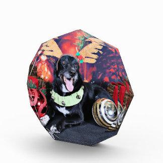 Christmas - Maverick - Border Collie X Acrylic Award