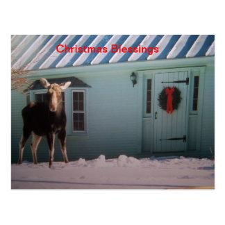 Christmas Moose Post Card
