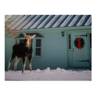 CHRISTMAS MOOSE POST CARDS