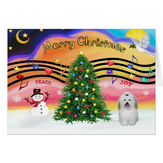 Christmas Music 2 - Coton de Tuledar (bow) Card
