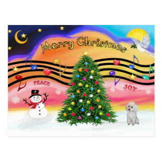 Christmas Music 2 - Poodle (white Toy) Postcard