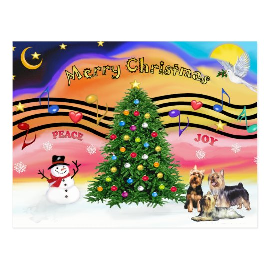 Christmas Music 2 - Silky Terriers (three) Postcard