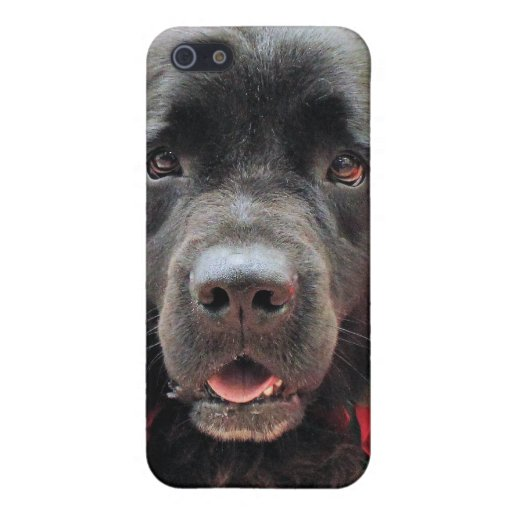 Christmas - Newfoundland - Izzie Case For iPhone 5
