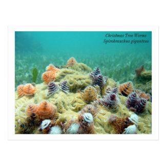 Christmas on the Sea Floor Postcard