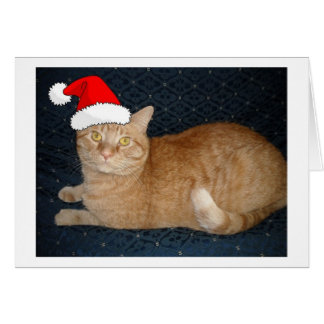 Christmas Orange Tabby Cat Greeting Card