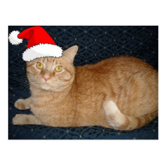 Christmas Orange Tabby Cat Postcard