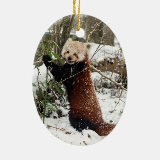 Christmas Ornament Red Panda Zazzle