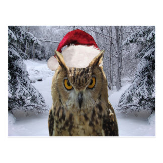 Christmas Owl Bird in a Santa Hat Post Card