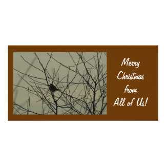 Christmas Photo Card:  Little Bird
