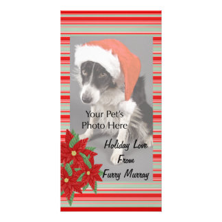 Christmas Photo Cards from your pets