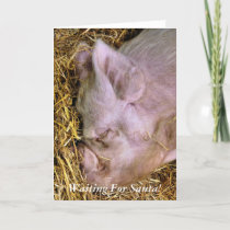 CHRISTMAS PIGS HOLIDAY CARD