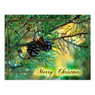 Christmas Pine Cones Postcard