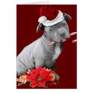 Pit Bull Christmas Gifts on Zazzle