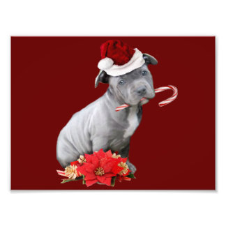 Christmas Pitbull puppy Photo Print