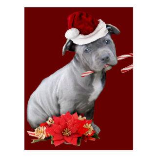 Christmas Pitbull puppy Postcard