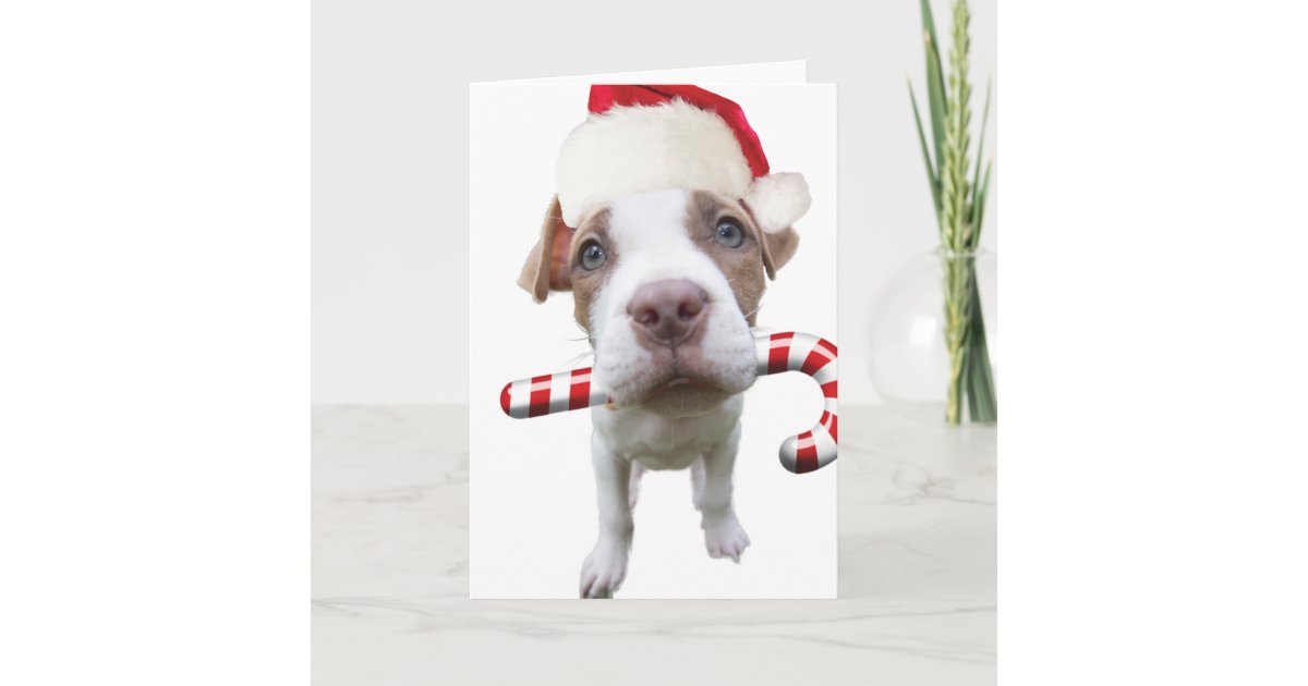 Christmas pitbull - santa pitbull -santa claus dog holiday card ...