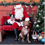 Christmas - Pitbulls - Mia & Lucian Acrylic Cut Outs