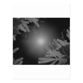 Christmas Poinsettia Black And Grey Postcard