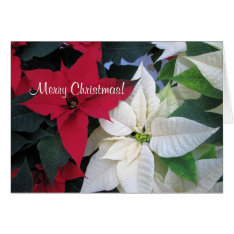Christmas Poinsettia Greeting Card at Zazzle