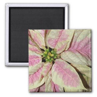 Christmas Poinsettia - Pink Magnet