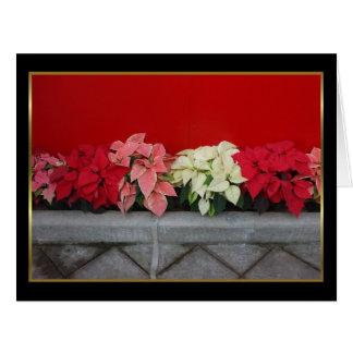 Christmas Pointsettia flowers Card