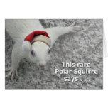 Christmas Polar Squirrel Greeting Card