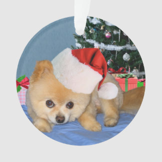 Christmas, Pomeranian Dog, Santa Hat Ornament