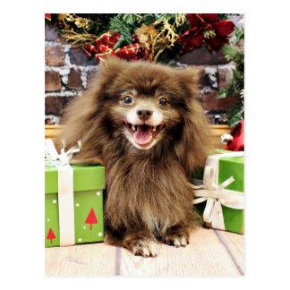 Christmas - Pomeranian - Fred Postcard