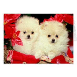 Christmas Pomeranians Card