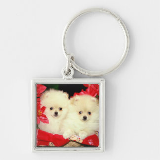 Christmas Pomeranians Silver-Colored Square Keychain