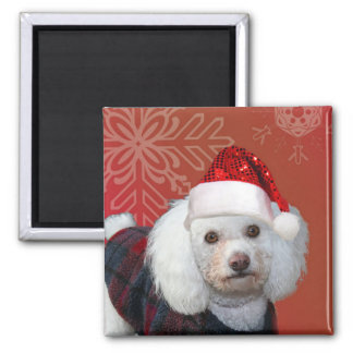 Christmas poodle 2 inch square magnet