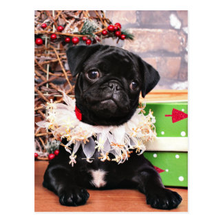 Christmas - Pug - Daisy Mae Postcards