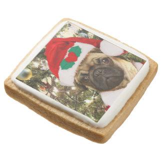 Christmas pug dog square shortbread cookie