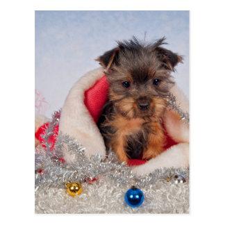 Christmas Pup Postcard