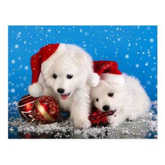 Christmas Puppies White Pomeranian Spitz Postcard