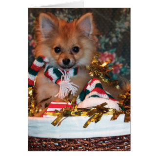 Christmas Puppy Card