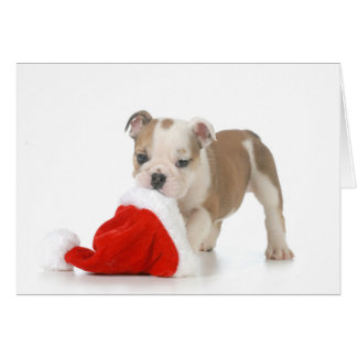 Christmas Puppy - English Bulldog Puppy Carrying Greeting Card
