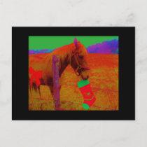 Christmas Rainbow Horse Holiday Postcard