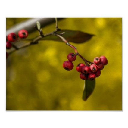 Christmas Red Berries Poster