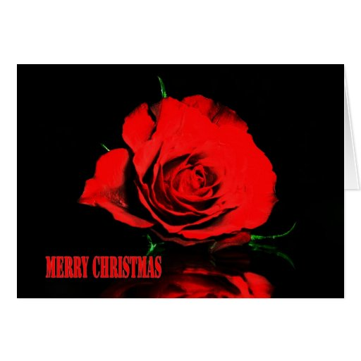 Christmas Red Rose Greeting Card