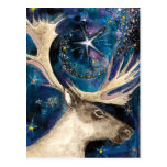 Christmas Reindeer at Night with a Shining Star Post Card