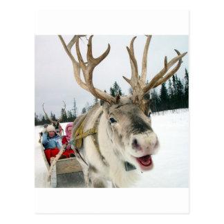 Christmas Reindeer Postcard