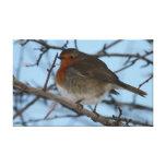 Christmas Robin, Forfar Canvas Prints