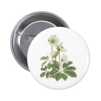 Christmas rose buttons