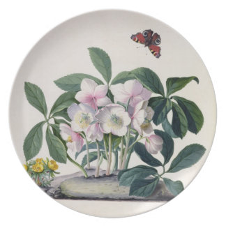 Christmas Rose Helleborus niger and Winter Aconi Party Plates