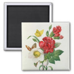Christmas Rose, Helleborus niger Refrigerator Magnet