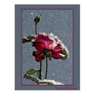 Christmas Rose Postcard