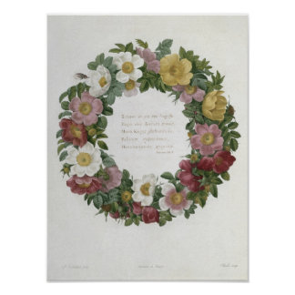 Christmas Roses Poster