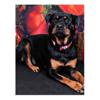 Christmas - Rottweiler - Nalani Post Card